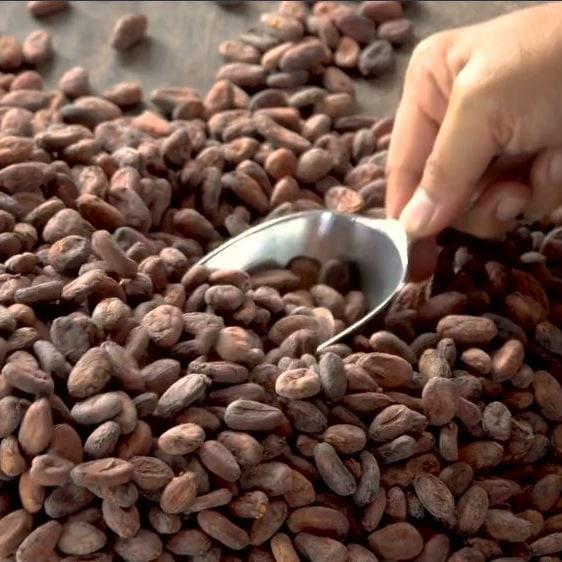 Kakao Reinigung | Premium Pralinen von ATTIMO Zürich